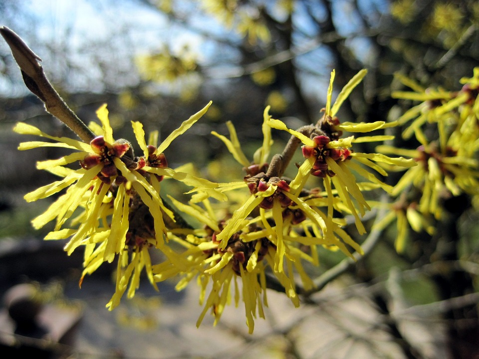 Difference Between Witch Hazel and Hydrogen Peroxide