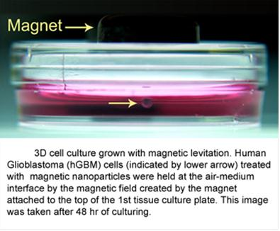 Difference Between 2D and 3D Cell Culture