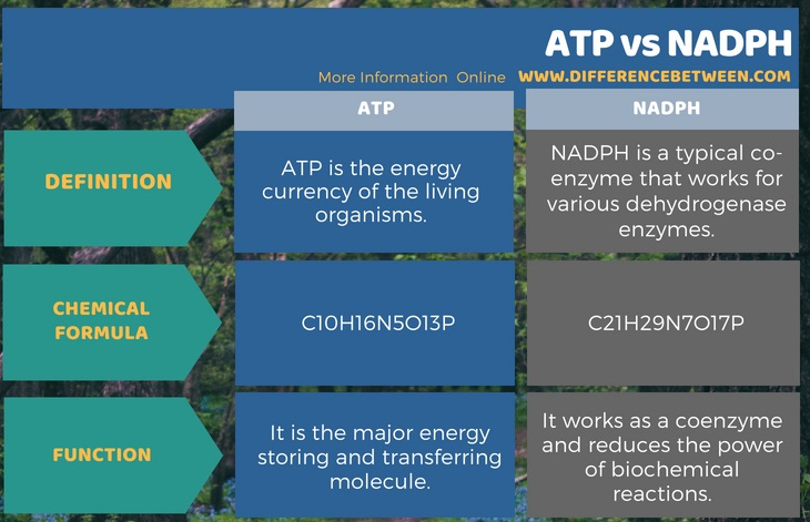 Difference Between ATP and NADPH in Tabular Form