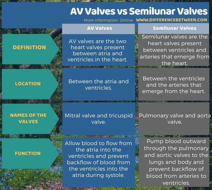 Difference Between AV Valves and Semilunar Valves in Tabular Form