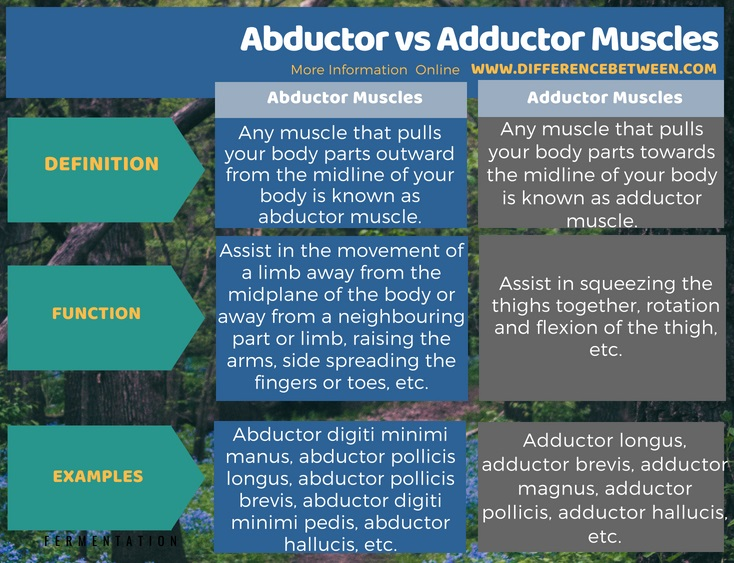 Difference Between Abductor and Adductor Muscles in Tabular Form