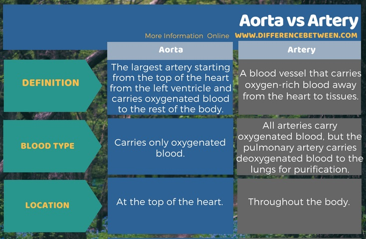 Difference Between Aorta and Artery in Tabular Form
