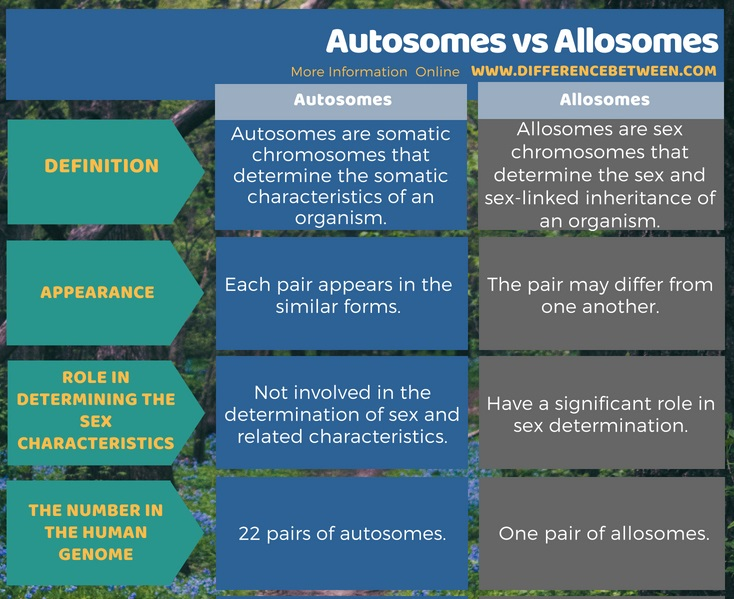 similarities between sex chromosomes and autosomes in Lowell