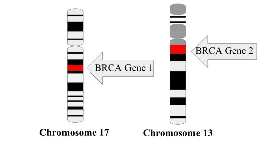 Difference Between BRCA1 and BRCA2 Mutation