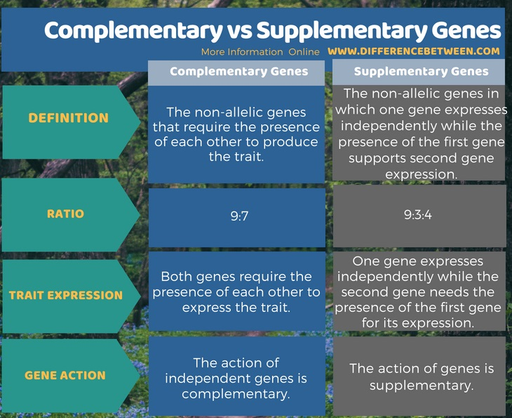 Difference Between Complementary and Supplementary Genes in Tabular Form