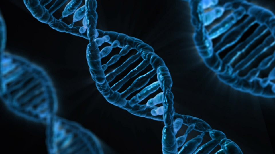 Difference Between Complementary and Supplementary Genes