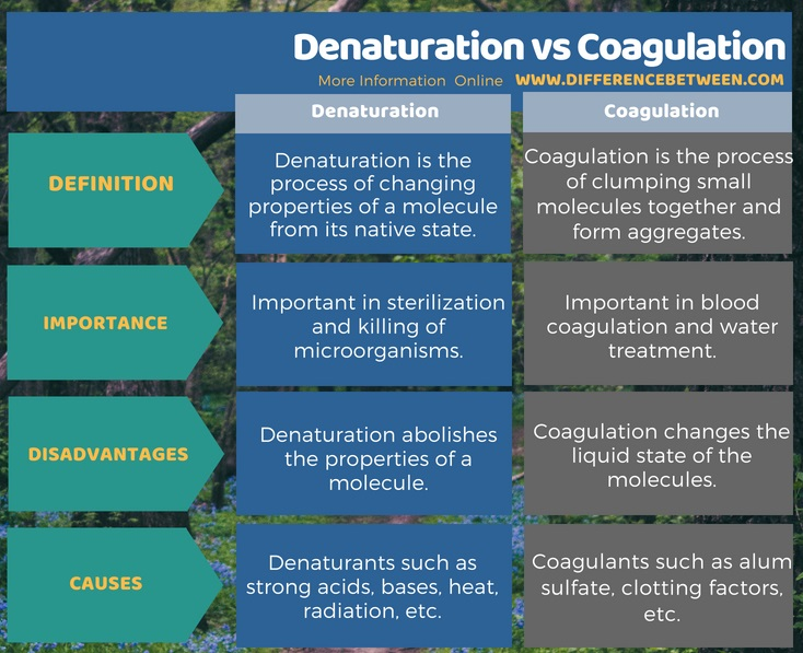 Difference Between Denaturation and Coagulation in Tabular Form