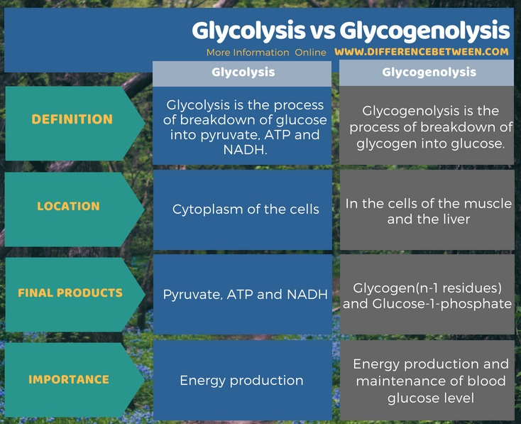 Difference Between Glycolysis and Glycogenolysis in Tabular Form