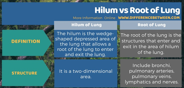 Difference Between Hilum and Root of Lung in Tabular Form