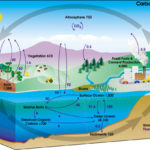 Difference Between Inorganic and Organic Carbon