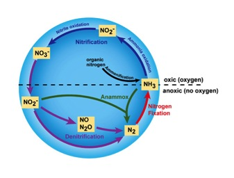Key Difference Between Nitrogen Fixation and Nitrification
