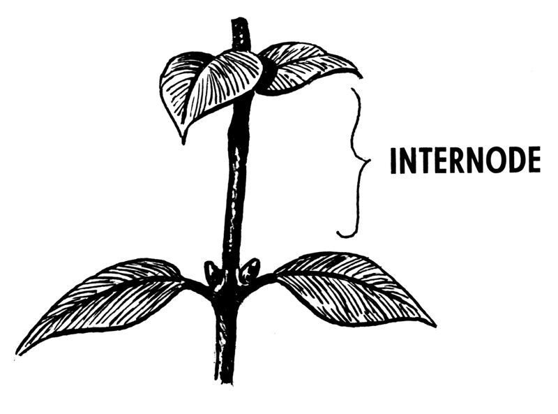 Key Difference Between Node and Internode