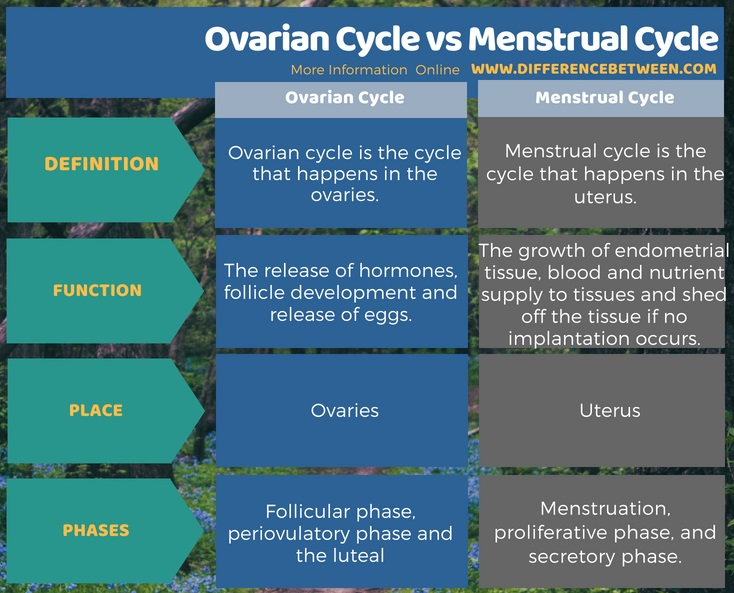 Difference Between Ovarian Cycle and Menstrual Cycle in Tabular Form
