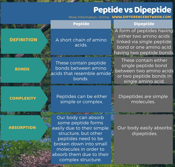 Difference Between Peptide And Dipeptide