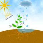 Difference Between Photosynthesis and Photorespiration