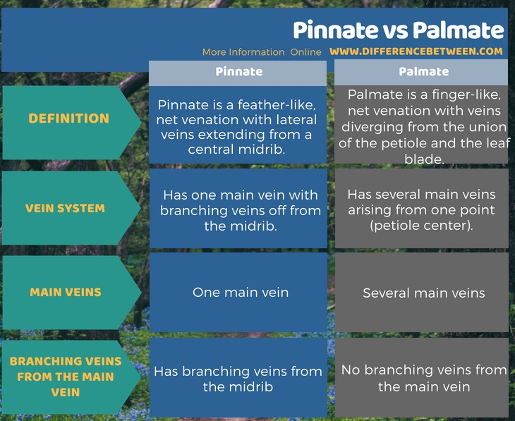 Difference Between Pinnate and Palmate in Tabular Form
