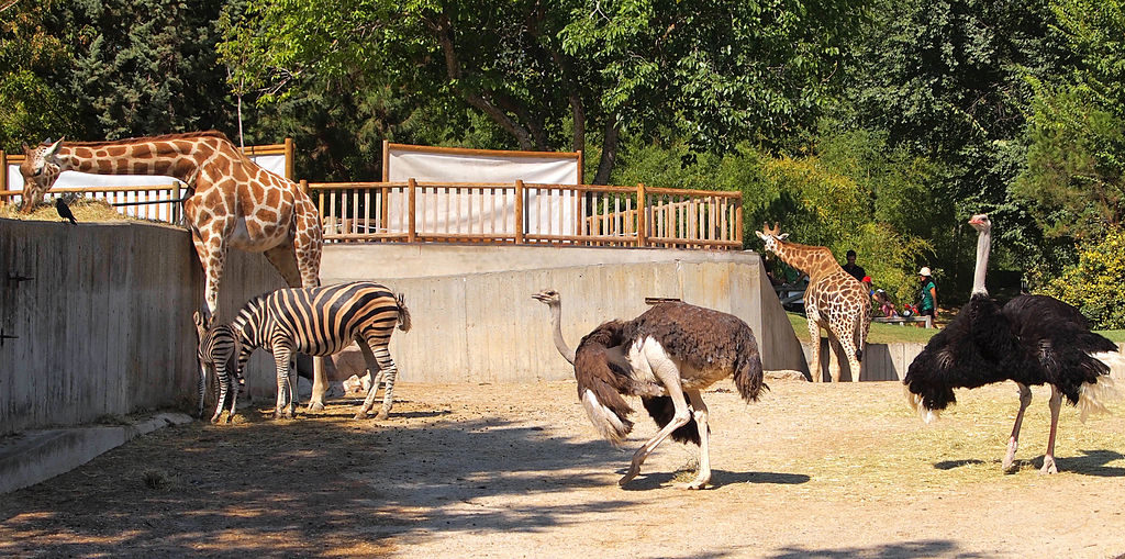 Key Difference Between Safari and Zoo