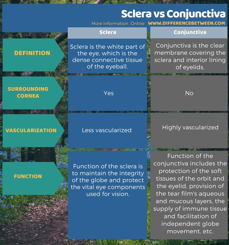 Difference Between Sclera and Conjunctiva in Tabular Form