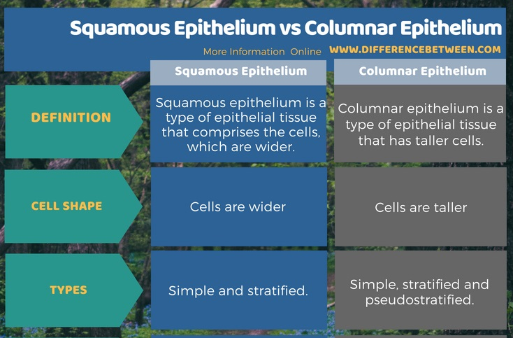 Difference Between Squamous Epithelium and Columnar Epithelium in Tabular Form