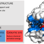 Difference Between Active Site and Binding Site