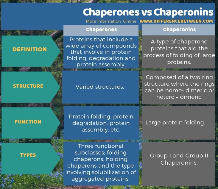 Difference Between Chaperones and Chaperonins in Tabular Form