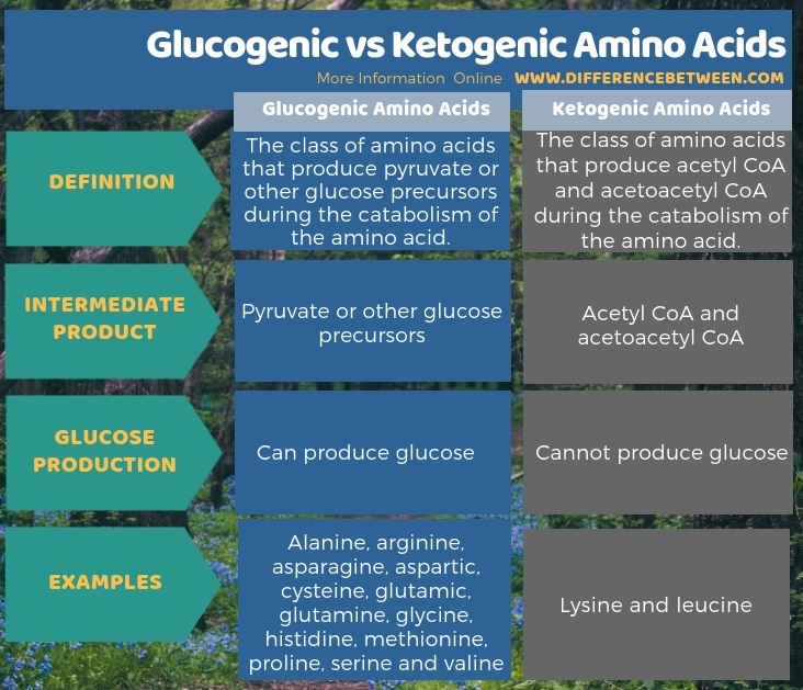 Difference Between Glucogenic and Ketogenic Amino Acids in Tabular Form