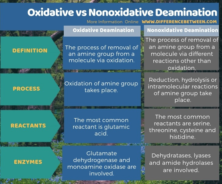 Difference Between Oxidative and Nonoxidative Deamination in Tabular Form