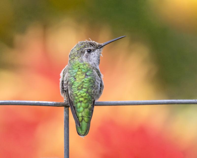 Key Difference Between Umbrella Species and Keystone Species
