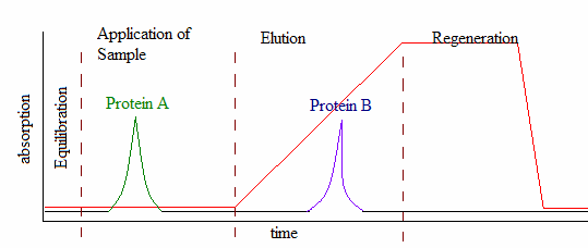 Key Difference Between Affinity and Ion Exchange Chromatography
