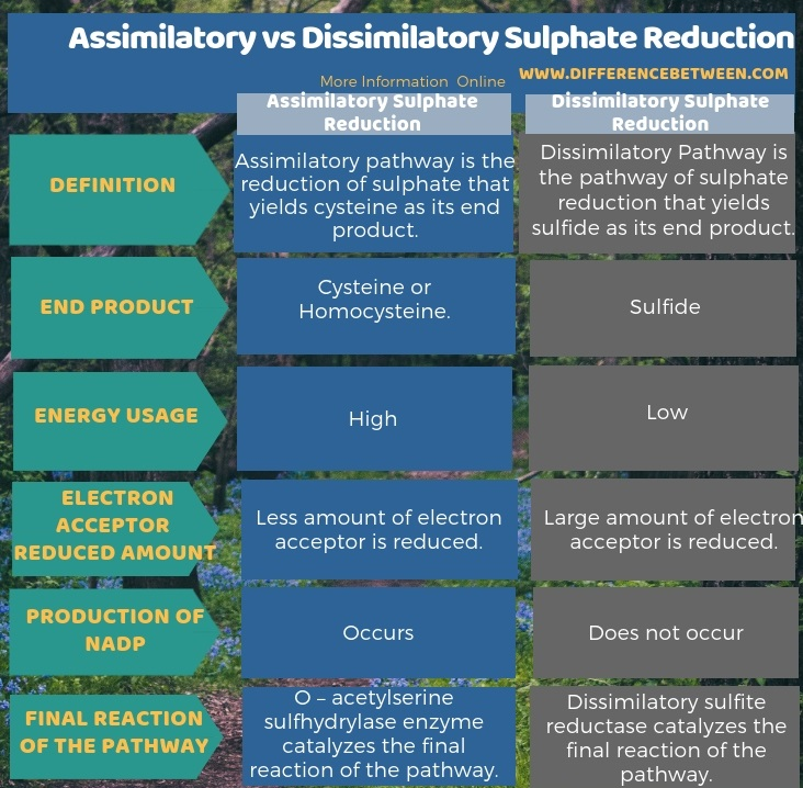 Difference Between Assimilatory and Dissimilatory Sulphate Reduction in Tabular Form