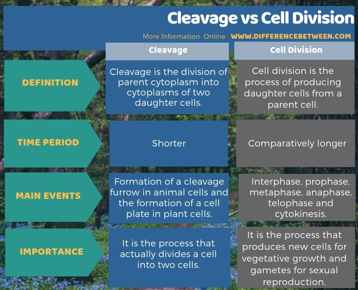 Difference Between Cleavage and Cell Division in Tabular Form