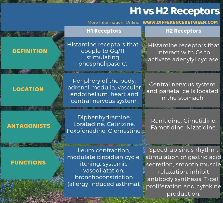 Difference Between H1 And H2 Receptors