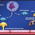 Difference Between Histamine and Antihistamine