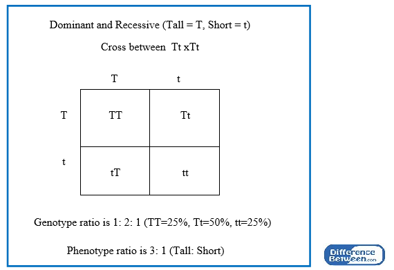 Difference Between Phenotype and Genotype Ratio | Compare ...