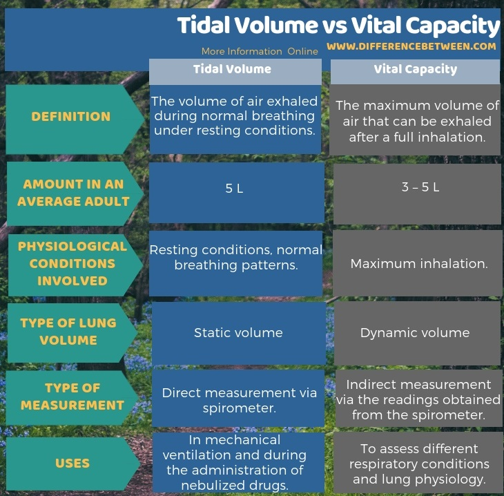 Difference Between Tidal Volume and Vital Capacity in Tabular Form