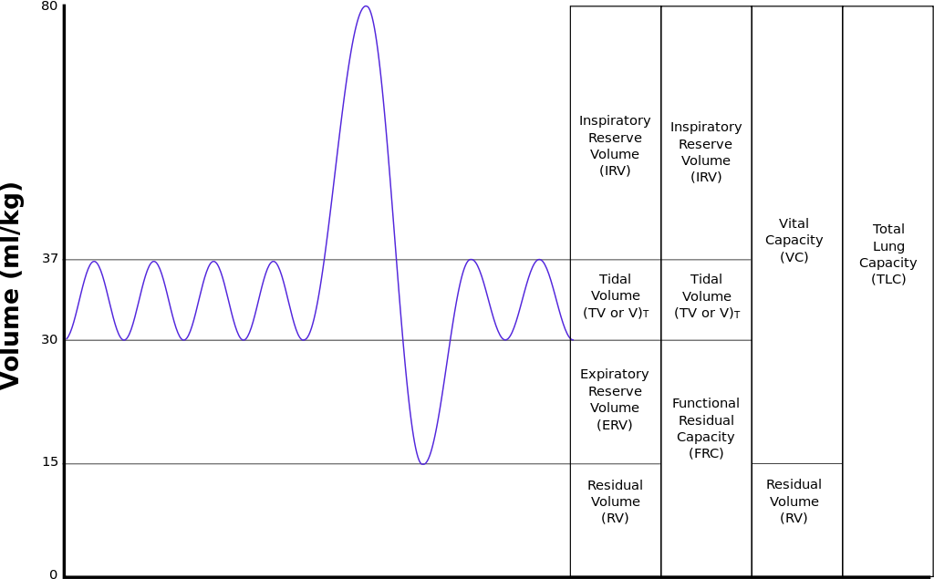 Difference Between Tidal Volume and Vital Capacity