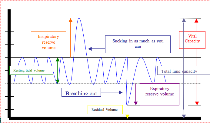 Key Difference Between Tidal Volume and Vital Capacity