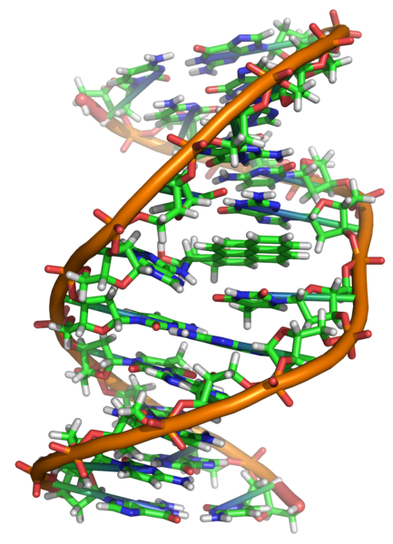 Difference Between Back Mutation and Suppressor Mutation