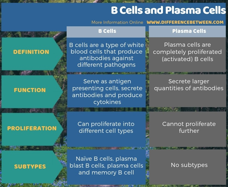 Difference Between B cells and Plasma Cells - Tabular Form