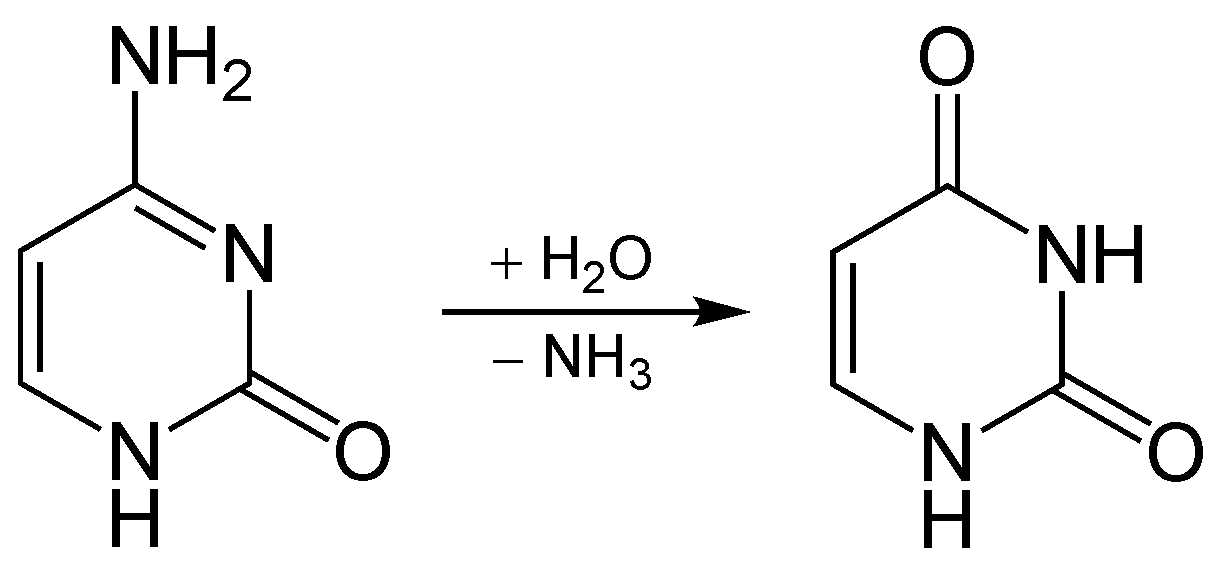 Difference Between Transamination and Deamination