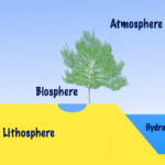 Difference Between Biosphere and Lithosphere