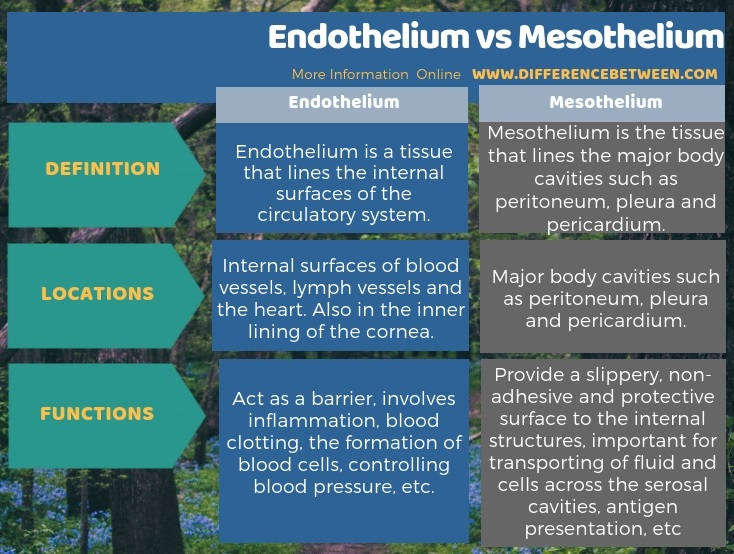Difference Between Endothelium and Mesothelium in Tabular Form