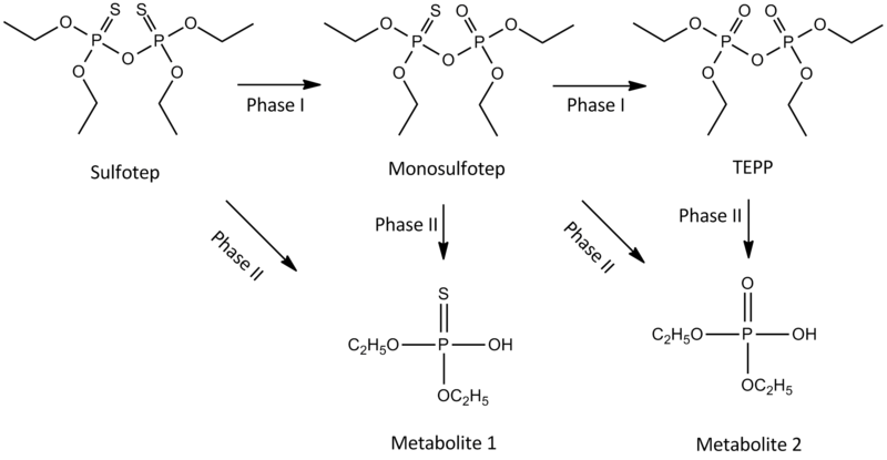 Key Difference Between Phase I and Phase II Metabolism