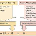 Difference Between Stroke Volume and Cardiac Output