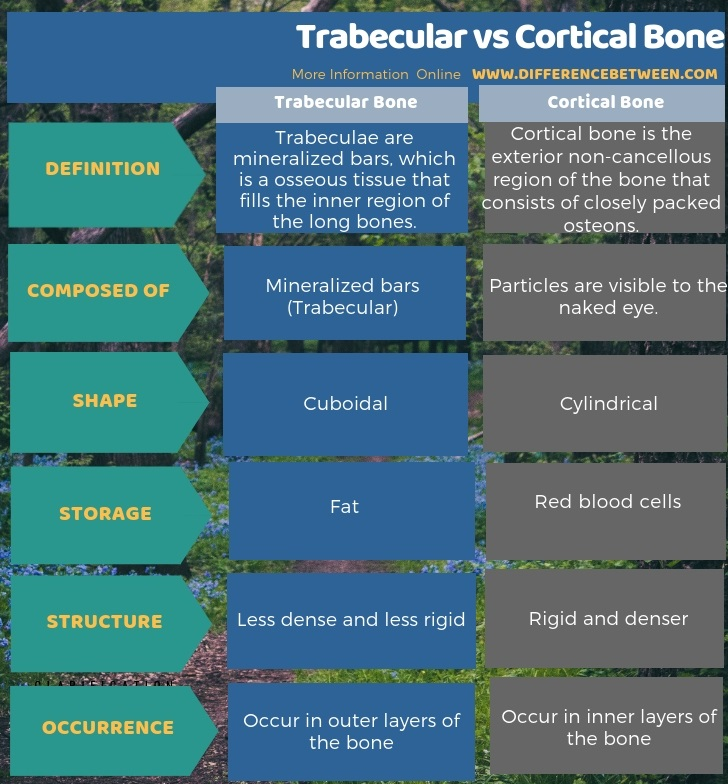 Difference Between Trabecular and Cortical Bone