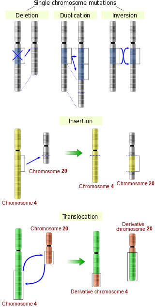 Key Difference - DNA Sequence Mutations vs Epigenetic Modifications