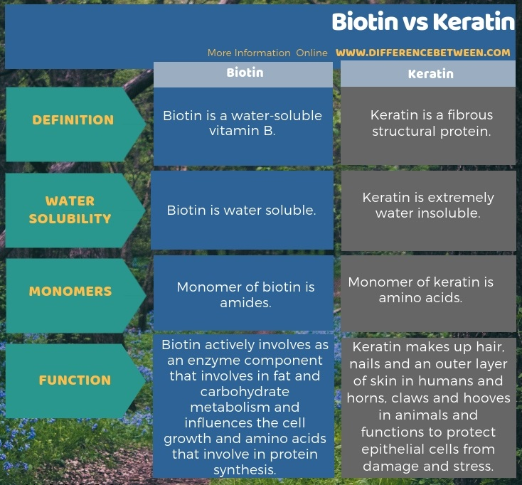 Difference Between Biotin and Keratin in Tabular Form