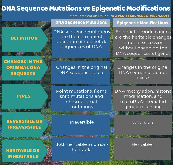 Difference Between DNA Sequence Mutations and Epigenetic Modifications - Tabular Form
