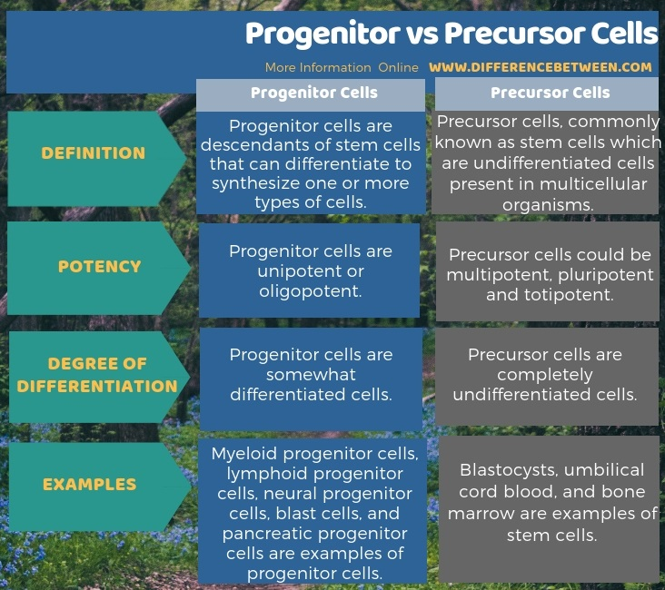 Difference Between Progenitor and Precursor Cells in Tabular Form