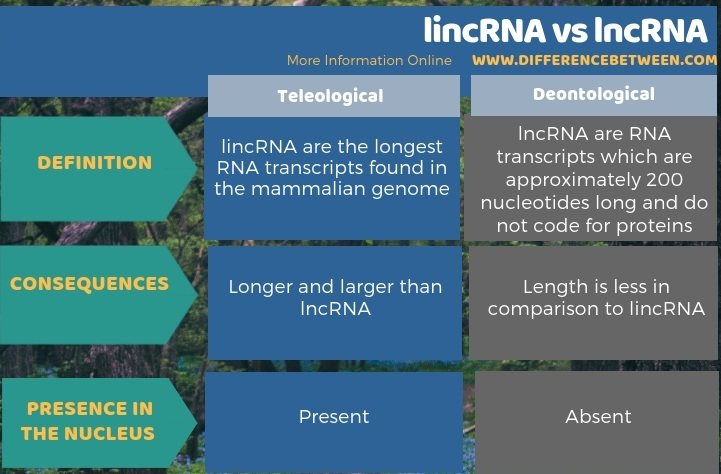 Difference Between lincRNA and lncRNA - Tabular Form